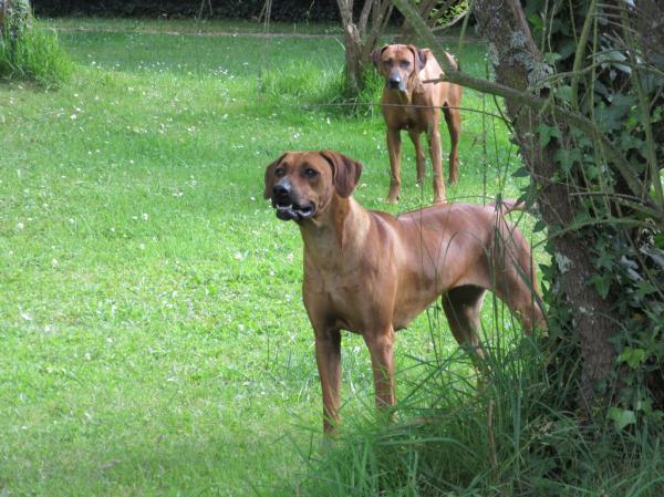 Olympe est une chienne dynamique et joueuse. Elle est très expressive et intelligente. Elle a déjà obtenu plusieurs prix en expositions nationales et internationales.